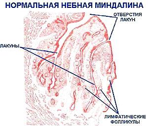 download Обряды и праздники татар Поволжья и Урала (Годовой цикл. XIX–нач. XX